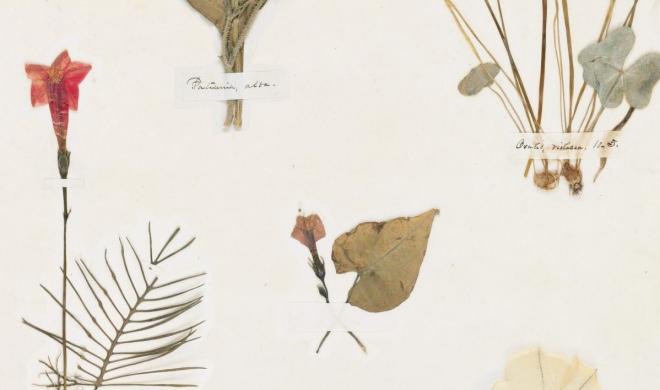 Herbário de Emily Dickinson é digitalizado