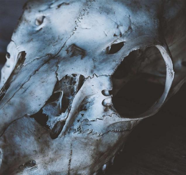 #61 | O Caso da Carniça