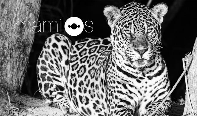 Como impedir a destruição do Pantanal?